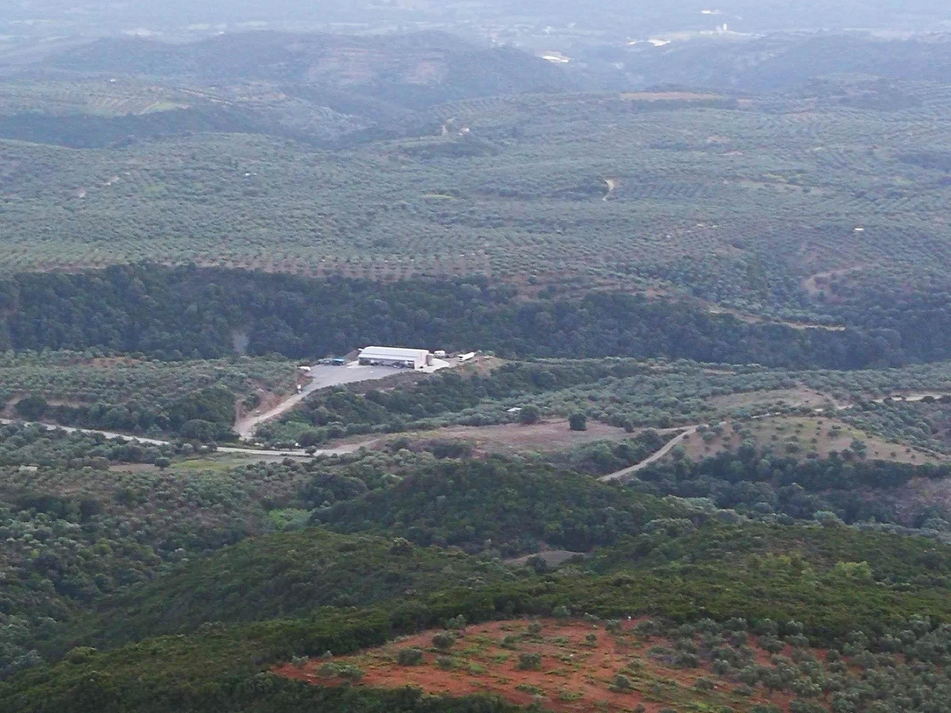 Λιόκλαδο - έξτρα παρθένο ελαιόλαδο - Ελαιοτριβείο Καραπατά - Μεσσηνία
